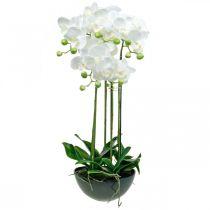 Orchidee artificiali in vaso pianta artificiale bianca 63cm