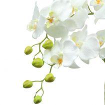 Orchidea bianca su palla di terra 65cm