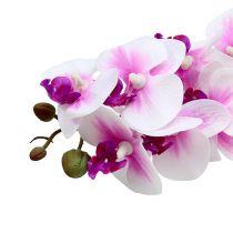 Ramo di orchidea bianco-rosa L58cm