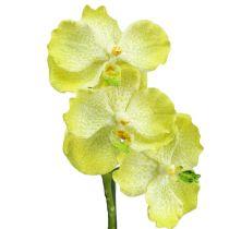 Orchidea con radici verde chiaro L43cm