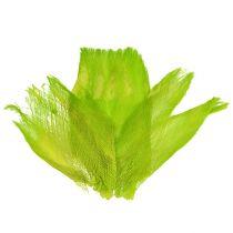 Fibra di palma pastello verde chiaro 400gr