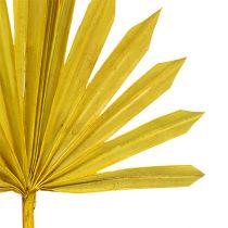 Palmspear Sun mini giallo 50pz