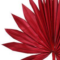 Palmspear Sun mini rosso 50pz