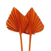 Palmspear mini arancio 100pz