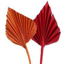 Palmspear assortiti rosso / arancio 50pz