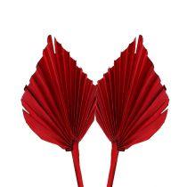 Palmspear mini rosso 100p