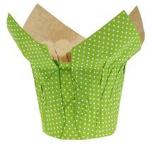 Vaso di carta Ø10cm H8cm verde 8pz