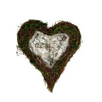 Pianta cuore di vite, muschio 22 cm x 25 cm H7 cm