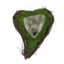 Pianta cuore di vite, muschio 22 cm x 28 cm H8 cm