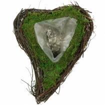 Pianta del cuore della vite, muschio 26 cm x 36 m H9 cm