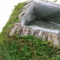 Cuscino per piante muschio, corteccia 20 cm × 20 cm
