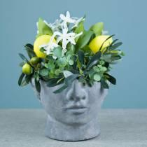 Piantare il busto della testa in cemento per piantare grigio H12cm 2 pezzi
