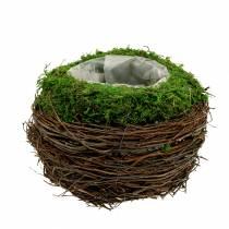 Ciotola per piantare in rattan, muschio Ø16cm H11cm