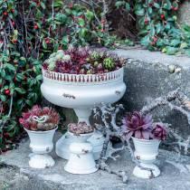 Coppa per Piantare Calice Antico Crema Ø7,5cm H9cm 1p