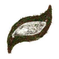 Pianta rampicante ondulata, muschio 45 cm x 18 cm H7 cm