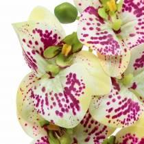 Ramo di orchidea artificiale Phaelaenopsis verde rosa H49cm