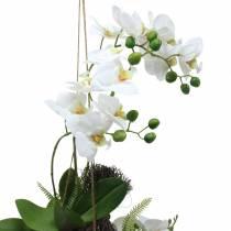 Orchidea con balle di felce e muschio da appendere Pianta artificiale 64cm
