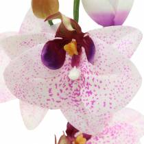 Phaleanopsis orchidea artificiale bianco, viola 43cm