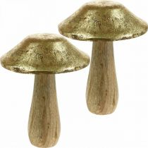 Fungo legno di mango oro, funghi decorativi naturali grandi Ø12cm H15cm 2 pezzi