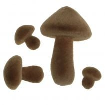 Funghi marroni affollati 12 pezzi