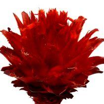 Plumosum 1 rosso 25pz