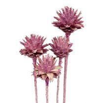 Leucospermum 1 mora surgelata 25pz