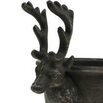 Coppa con teste di cervo Ø21cm H28.5cm