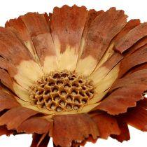 Repens rosone light 8-9cm 25 pezzi