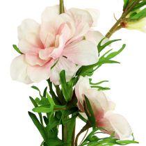 Delphinium Delphinium rosa chiaro L95cm