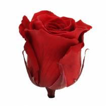 Rose Infinity grandi Ø5,5-6cm rosse 6 pezzi