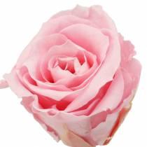 Rose eterne medie Ø4-4,5cm rosa 8 pezzi