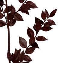 Ramoscelli di rusco rosso scuro 75 cm - 95 cm 1 kg