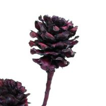Rami di Salignum con pigne Bordeaux 25pz
