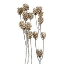 Salignum imbiancato 25 pezzi