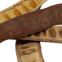 Cialde Scaletta naturale 25cm - 50cm 25pz