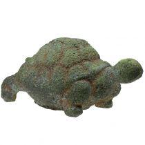 Tartaruga muschiata muschio 30 cm x 18 cm H15 cm