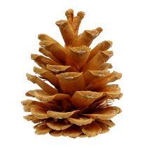 Crema di pino nero 5-8 cm 1 kg