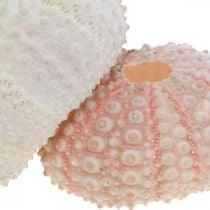Decorazione marittima riccio di mare custodia rosa, deco dispersione bianca 55 pezzi