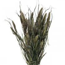 Fiori secchi Setaria antracite miglio naturale mazzetto 100g
