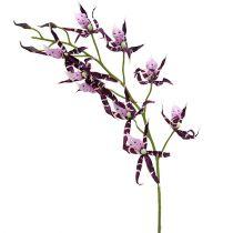 Orchidee ragno Brassia viola 108 cm 3 pezzi