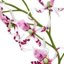 Orchidee ragno Brassia rosa-bianco 108 cm 3 pezzi