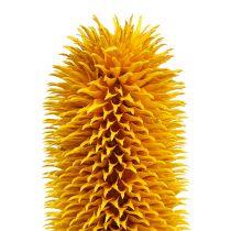 Spitzkarden Yellow 1kg