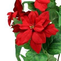 Bouquet Poinsettia Rosso L47cm