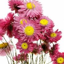Fiore di paglia in mazzo Fiori rosa essiccati 25g