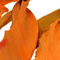 Strelitzia Leaves Orange 120cm 20pcs