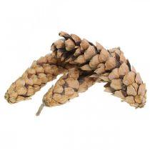 Pigne Pino di Weymouth Strobus Naturale Misto 2.5kg