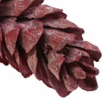 Coni Strobus decoro naturale rosso 15cm - 20cm 50 pezzi