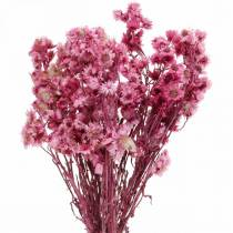 Fiori Secchi Bouquet di Fiori Secchi Rosa Fiori Secchi Rosa H21cm