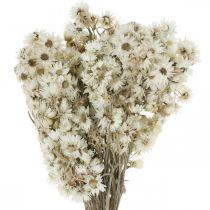 Everlasting Flowers Bouquet di fiori secchi bianco piccolo 15g