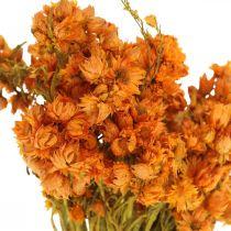 Fiori Eterni Fiori Secchi Arancioni Piccoli 15g